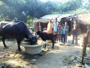 Shiv Chandra with his family and new water buffalo in India.