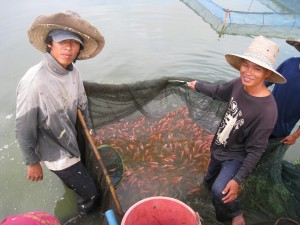 Fish farmer in Thailand